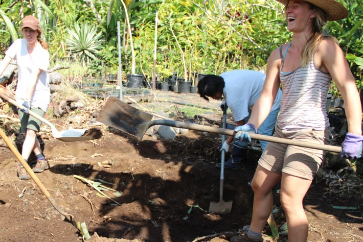 Big Island Farm Internship