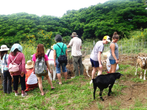 Hawaiian farm tour