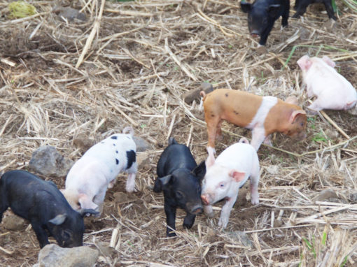 Big Island farm tour