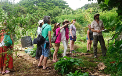 Ecotourism and Tours in Hawaii