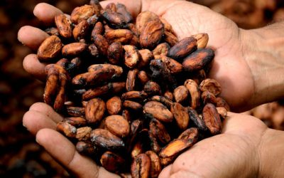 Cacao: The Food of the Gods